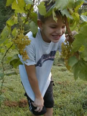 skyler and white grapes